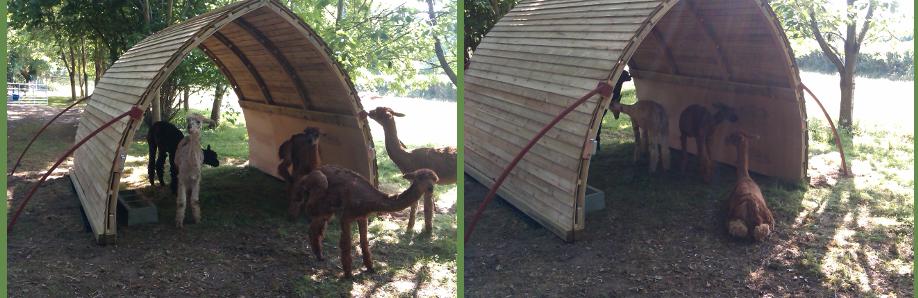 Innovative Mobile Shelter : The alpaca arc
