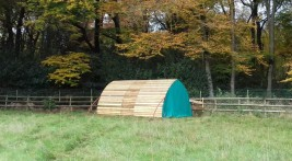Horse Arc in Buckinghamshire with fly nets