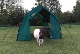 The Shetland Horse Arc