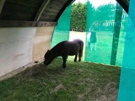 A purpose-built field shelter for Shetland horses