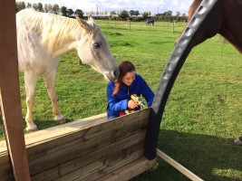 Building a Horse Arc