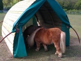 Shetland horses in their field shelter