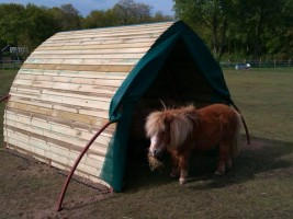 A perfect size shelter for Shetland horses