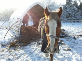 Horses sheltering from the snow