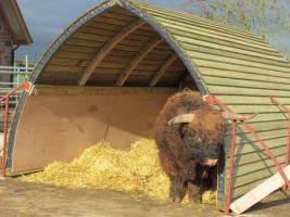 Mobile field shelter for cattle