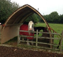 Open-ended shelter being used to join paddocks