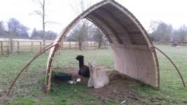 Mobile field shelter for alpacas