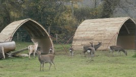 A field shelter for deer