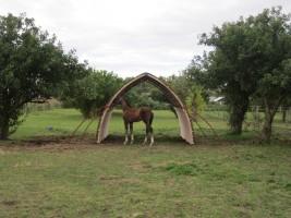 Foal inspecting a field shelter