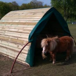 Shetland Horse Arc