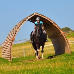 Large Horse Arc