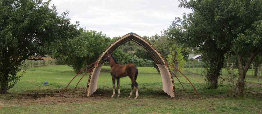 Horse inspecting its field shelter