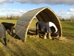 Horses and ponies love the field shelter