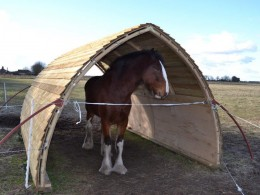 Large field shelter for 2 x 16hh horses
